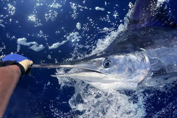 Deep Sea Fishing in Port Aransas
