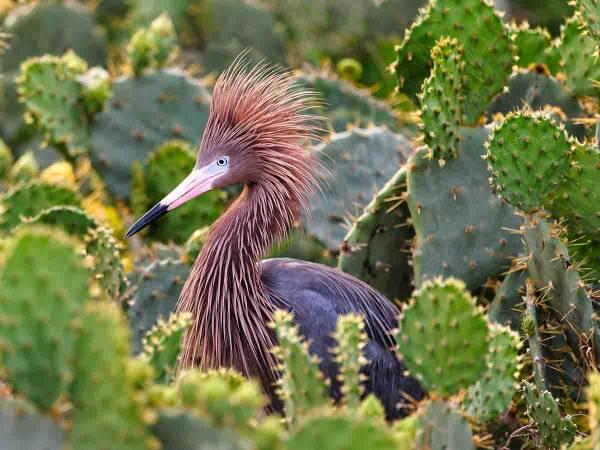 Bird in Port A, Texas