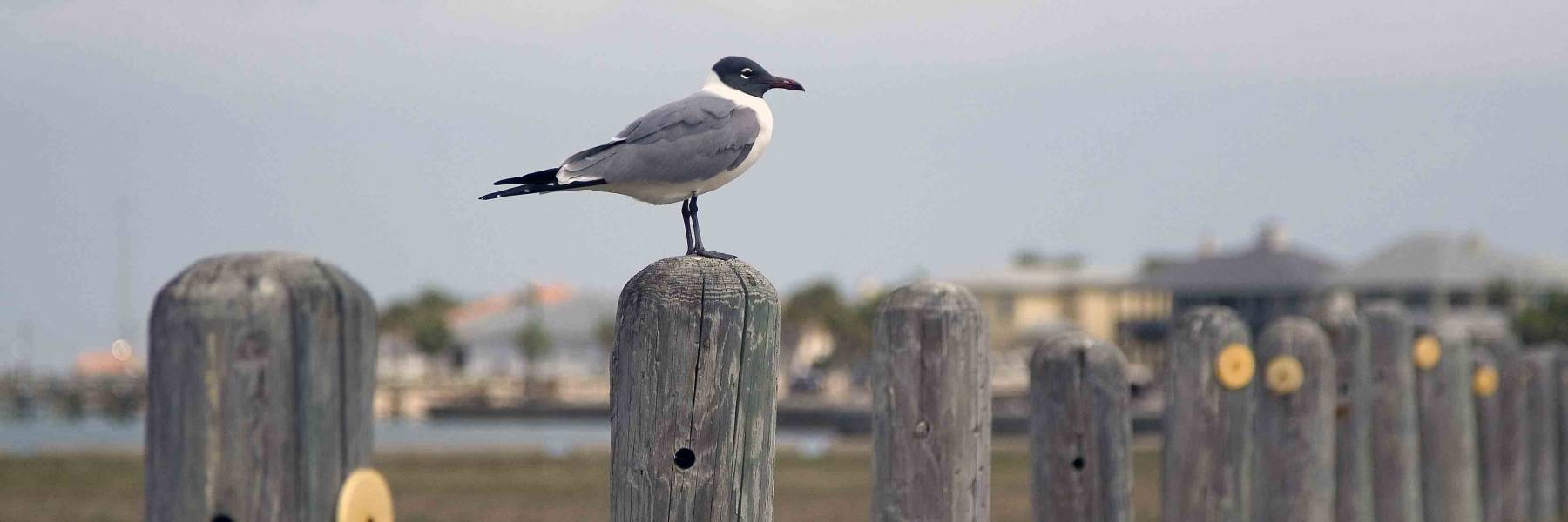 Bird on a post in Port Aransas Texas