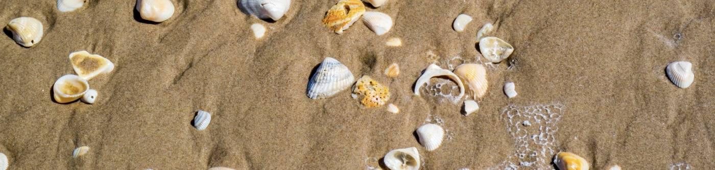 A view of Texas sea shells